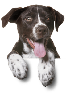 footer-dog-free-img-1-214x300.png